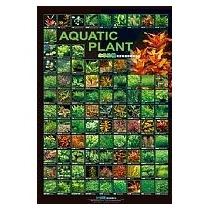 Azoo Poster Con Fondo Mate Y A Color De Plantas Acuaticas I.