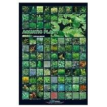 Azoo Poster Con Fondo Mate Y A Color De Plantas Acuaticas Ii