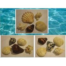 Paquete 15 Conchas Y Caracoles Marinos Mar (10 A 15 Cm)