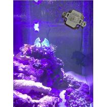 Led Royal Blue Acuario Marino 10 Watts