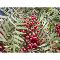 100 Ml Hidrolato Floral 100% Pirul Molle Aromaterapia