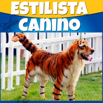Como Ser Estilista Canino Profesional Y Estetica Canina 2015