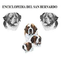 Enciclopedia Del San Bernardo, Adiestramiento, Cachorro