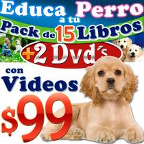 El Mejor Adiestramiento Canino 15x1 Mas Veterinaria Estetica