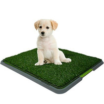 Doggy Patch Tapete Entrenador Cachorros Perros Potty, Tv