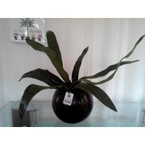 Plantas Artificiales En Maceta De Luz Bnf