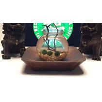 Planta Pecera Casa Oficina Mason Jar Marimo Moss Ball Betta