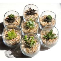 Adorno Para Casa, Hogar, Cactus Miniatura, Suculentas
