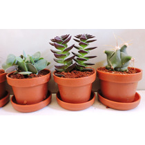 Decoración,adorno Para Hogar, Plantas Miniatura, Ecofriendly