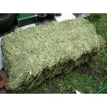 Alimento Heno De Alfalfa Conejos Cobayos Cuyos Roedores