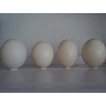 Cascarones De Huevo De Avestruz