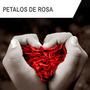 Petalos De Rosas Artificiales - Paquete 500 Piezas