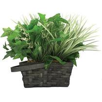 Cámara Oculta En Planta Decorativa Con Dvr