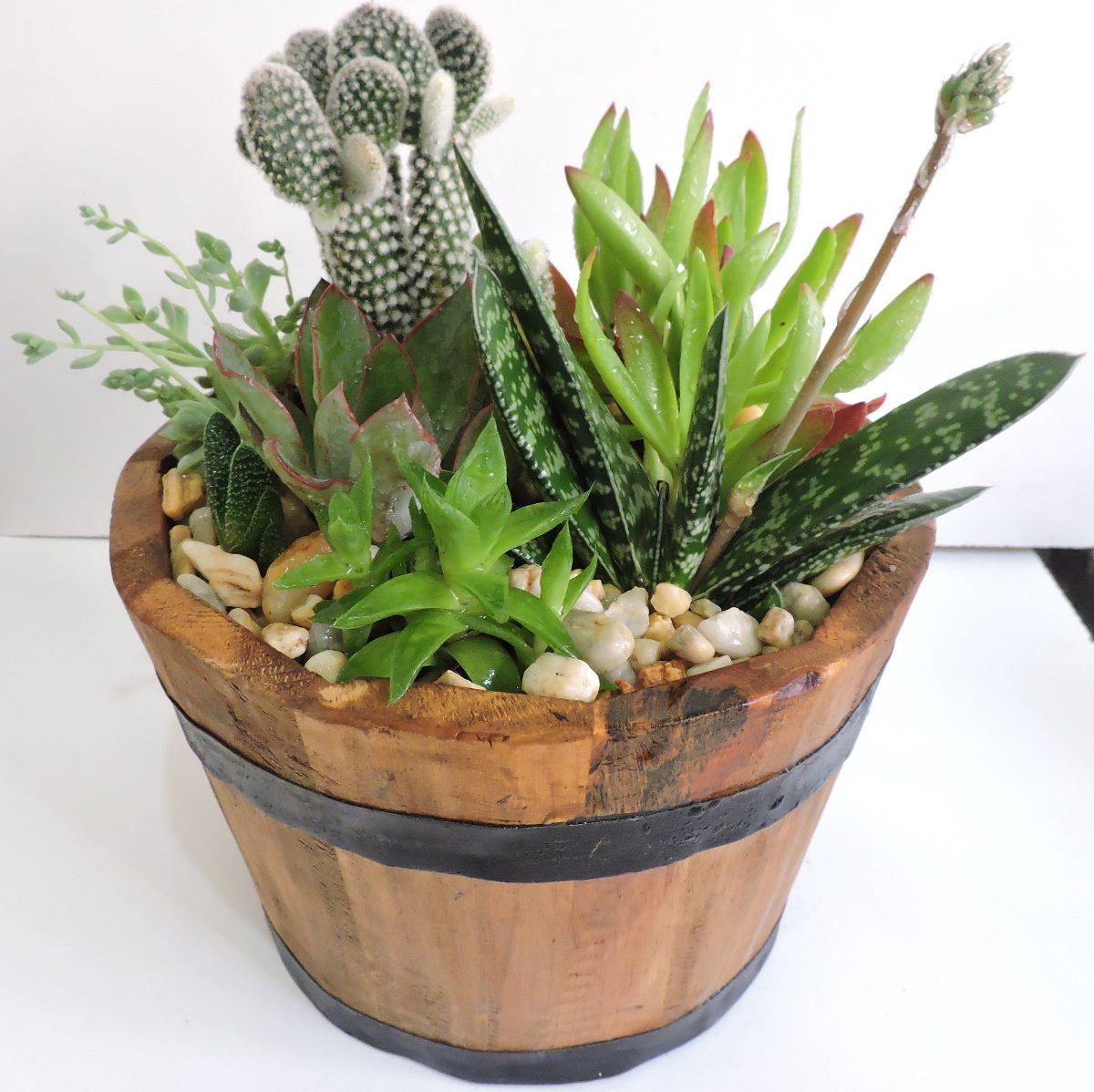 Centro de mesa con plantas crasas car interior design for Plantas crasas interior