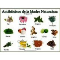 Antibioticos De La Madre Naturaleza