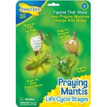 Insectos Lore Praying Mantis Etapas Del Ciclo De Vida