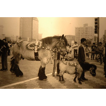 Evalcon Ernesto Valdes Fotografia Caballo De Tiro Y Pony