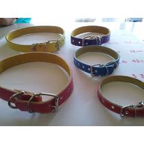 Collar Para Perro Piel Colores No.7 70cm Enviamos Express