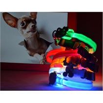 10 Collares Led Para Chihuahua- Precio De Mayoreo