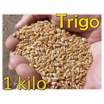 Semilla Trigo 1 Kilo Grano Wheat Grass Integral Wheatgrass