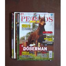 Bull Dog Inglés-boxer-dogo-mastin-otros-lote7 Rev-perros-hm4