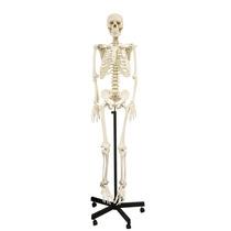 Esqueleto Humano Modelo Anatomico 1.68 Metros