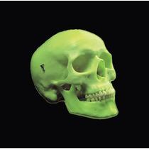 Modelo Anatómico, Cráneo De Neón, Marca 3b, Modelo A20/n