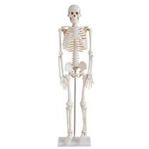 Esqueleto Humano Modelo Anatomico Tamaño 85cm Hm4