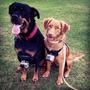 Arnes Para Perro Dog Fetch Camara Gopro Go Pro Accesorios