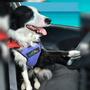 Arnés De Seguridad Para Perro