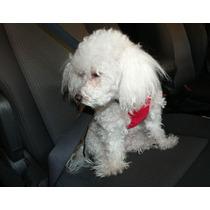 Pechera Arnés Cinturón De Seguridad Para Perro O Gato