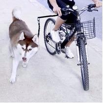 Correa De Perro Con Soporte Para Bicicleta Doggy Bike