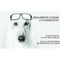 Identificacion Para Collar, Mascotas, Tipo Ife, Plaquita