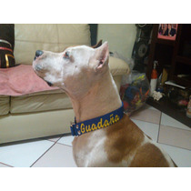 Collar De Identificacion Perro