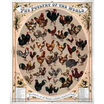 Lienzo Tela Aves De Corral Boston 1868 62 X 50 Cm Litografía