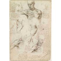 Cuadro En Tela Anatomía Hombro Leonardo Da Vinci 73 X 50 Cm