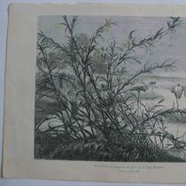 Litografia (23x31 Cms): Egipto. Congreso De Aves En El Lago