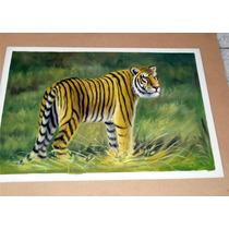 Tigre. Pintura Al Óleo En Medidas 60 X 90 Cm Envío Gratis
