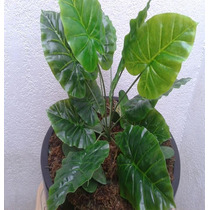 Plantas Para Macetas Vbf