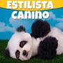 Aprende Estética Canina Y Estilista De Perros Mega Pack 2015