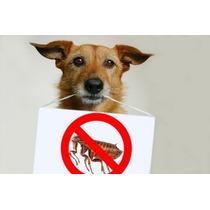 Pulgas Y Garrapatas? Adios Al Problema En Perros Y Gatos