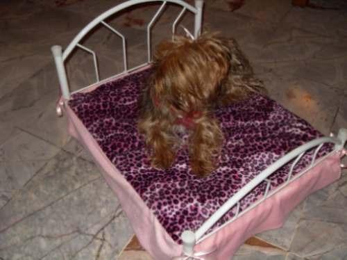 Casa Para Perro De Madera Extra Grande 1 Mt. X 90 X 1.05 Dpa