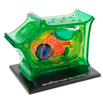 Modelo De Celula Vegetal 4d Hm4