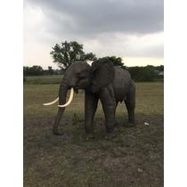 Animales Disecados 100% Artificiales Elefante Africano 1.90