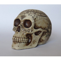 Cráneo Signos Del Zodiaco Sol Luna Colección Astrología