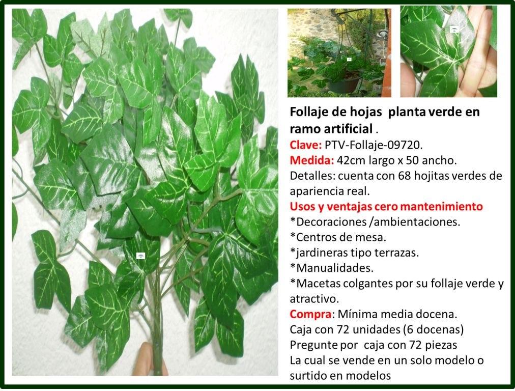 Flores y plantas follaje para el hogar omm en for Plantas en el hogar