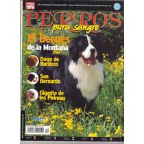 Revista Perros Pura Sangre Bernés De La Montaña Dicie 2003