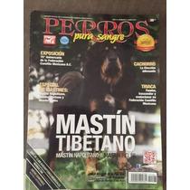 Dogo Del Tibet O Mastin Tibetano Revista Perros Pura Sangre