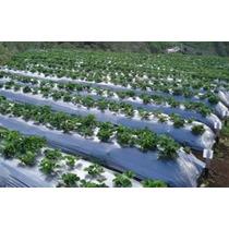 Acolchado Agricola Anchos 1.20 M, 1.40 M Por 915m