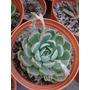 Sustrato Mineral Para Suculentas Y Cactus.